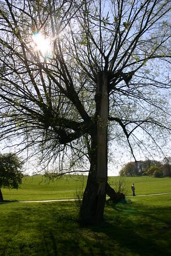 Spikey Tree