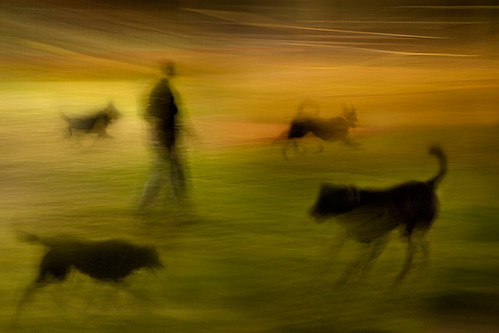 4 dogs,1 man by wizmo