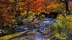 Otoo / Bariloche (Facu551) Tags: autumn patagonia fall argentina colores otoo hdr bariloche autumm ocre rionegro patagoniaargentina sancarlosdebariloche valledelchallhuaco facundovital