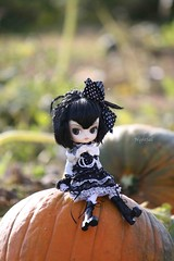 ADAW 41/52: Pensive in the Pumpkin Patch