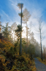 Foggy Forest (petetaylor) Tags: trees color fall fog vancouver forest nikon stanleypark guessed nikkor guesswherevancouver d80 175528 petertaylorphotography wwwpetertaylorphotocom tgamphotodeskcolour