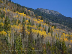 Autumn Slope (johnfuj) Tags: mountain canada mountains nature ecology forest scenery britishcolumbia can mount land northamerica environment environmentalism ecosystem westerncanada