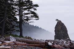 Soft Light (absencesix) Tags: ocean travel trees sky plants usa mist beach nature weather clouds iso200 washington log october rocks unitedstates olympicpeninsula noflash pacificocean backpacking northamerica forks pinetrees locations 2010 seastack rialtobeach locale manualmode 110mm camera:make=canon geo:state=washington exif:make=canon exif:iso_speed=200 canoneos7d activityaction overcastcloudy objectsthings naturallocale selfrating3stars exif:focal_length=110mm 2010travel 130secatf80 geo:countrys=usa ef70200mmf28lisiiusm camera:model=canoneos7d exif:model=canoneos7d subjectdistance∞ exif:lens=ef70200mmf28lisiiusm exif:aperture=ƒ80 geo:city=forks forkswashingtonusa october22010 olympicnationalpark1001201010032010 geo:lat=47941393625002 geo:lon=12464964 47°562902n124°38587w