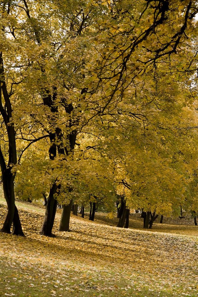 Poznań / Autumn 2010