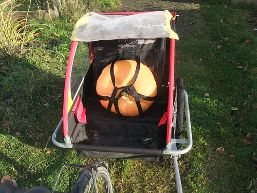 The biggest pumpkin this year...