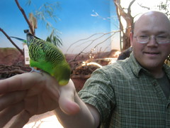IMG_6625 (Scott O'Dell) Tags: zoo nick budgie