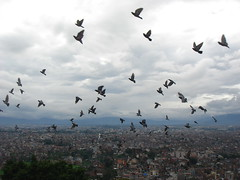 Flocks of Birds (jk10976) Tags: nepal sky birds clouds landscape asia kathmandu monkeytemple swayambhunath blueribbonwinner flocksofbirds shieldofexcellence superbmasterpiece firsttheearth jk10976 jk1976 platinumheartaward jkjk976 justhitmewithyourbestshotadminsfavforoctober