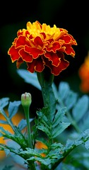 flora (Rice Matters) Tags: flower ilovenature top20flowers flowerpicturesnolimits photofaceoffwinner pfogold