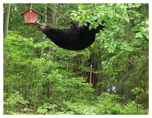 995361290 e244375670 Funniest Animals
