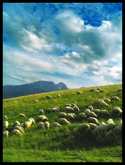 Sheeps (gringo_and_brunette) Tags: blue summer sky color green nature grass clouds sheep poland polska moutain gry tatry zakopane giewont chmury lato owce gubawka ishflickr naturewatcher