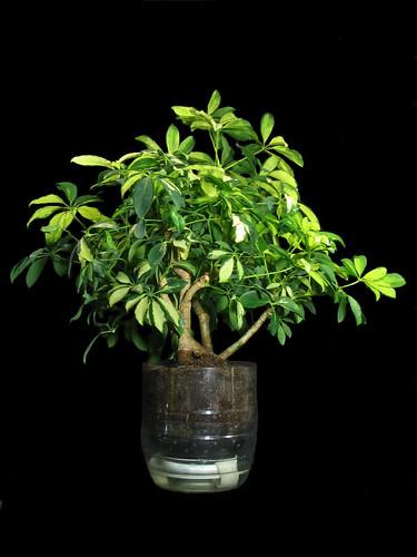 Pretzels Planter