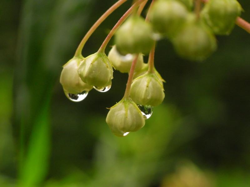 In the Rain #1