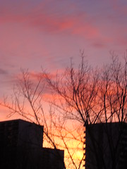 Another sunrise in TO (Trinimusic2008 - stay blessed) Tags: morning pink trees sky sun toronto ontario canada colors silhouette yellow skyline clouds sunrise buildings outdoors early warm colours yours to mywinners abigfave diamondclassphotographer flickrdiamond citritbestof rubyphotographer photographersgonewild rubyphotograper trinimusic2008