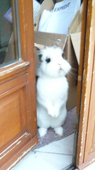 Oh, hello...you're not an encyclopaedia salesman, are you? (JAM FROG) Tags: door pet snow cute rabbit bunny animal conejo fluffy lapin salesman buk encyclopaedia kanninchen rabbitinsnow encyclopaediasalesman