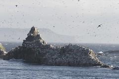 Sea Bird Colony (Newfoundland and Labrador Tourism) Tags: tourism newfoundland labrador birdwatching avalon birdcolony newfoundlandandlabrador newfoundlandandlabradortourism