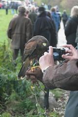 Greifvogel innerhalb des Ringwalls am Haddebyer Noor - Wikinger Museum Haithabu WHH 24-10-2010