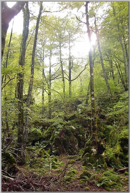 165.- Bosque del Monte Agüera, en el cauce del río Samedón.