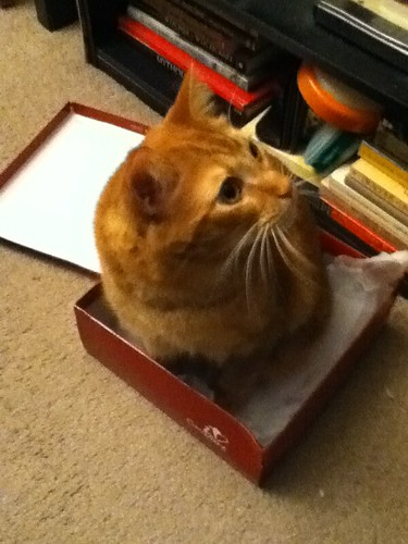 Ptw Cat in box