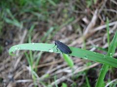 IMG_6923 (kobayan54) Tags: 虫