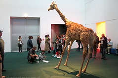 documenta 12 | Peter Friedl / The Zoo Story | 2007 | documenta-Halle