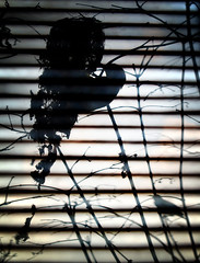 they are back! (AraiGodai) Tags: bird thailand nest bangkok balcony condo olivebackedsunbird cinnyrisjugularis nectarinajugularis yellowbelliedsunbird yellowbreastedsunbird olivebacksunbird olivebackedsunbirds