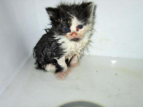 pitiful kitten