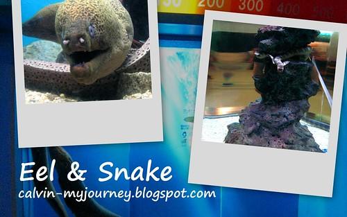 Eel & Snake