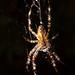 Day 240: Spider