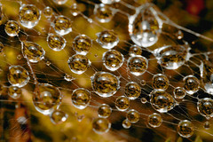 refraction (Haentjens Raphal - Macropixels) Tags: macro nature beautiful up canon wow eos close belgique magic ardennes best e stunning excellent mp magical 65 2007 raphal macrophotography wallonie mpe vielsalm mpe65 macrophotographie stuning xti 400d salmchateau haentjens macropixels wwwphotomacrobe salmchteau mpe65mmf281x5x canonmpe65mmf2815xsupermacro