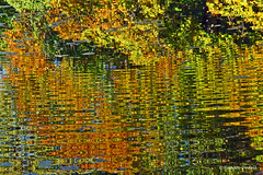 Autumnal Reflection (dorena-wm) Tags: autumn orange lake green water see wasser
