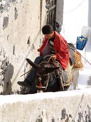 Donkey Working Away (wirralwater (NO MORE UPLOADS)) Tags: white man building animal stone wall island working donkey away santorini greece walls wor