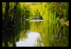 Peace and Friendships (Gary*) Tags: park sunlight green nature water reflections bravo peace shade willows orton peopleschoice supershot magicdonkey lovephotography