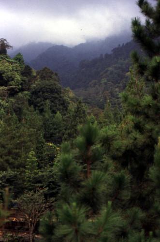 Puncak-View