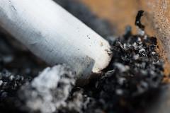 Cigarette butt (flippantfiasco) Tags: nikon cigarette butt d70s stump 90 ryk sigarett tamron90mmf28macro personligfavoritt