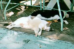 Key West trip 2001, Ron's photos 033 (edgarandron - busy!) Tags: cats cat keys florida keywest notmycat