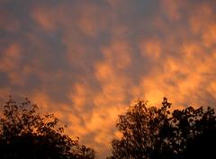Nice sky this evening (Per Ola Wiberg ~ powi) Tags: nature clouds sunsets moln 2007 eker wrangels sweden trees trd solnedgng solnedgngar naturescenes onlythebestare wow irresistiblebeauty sundaywalks supershot shiningstar blueribbonwinner