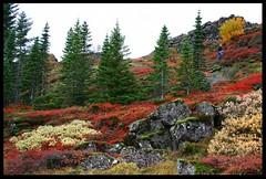 Haust á Þingvöllum (Brynja Eldon) Tags: park trees red green nature yellow flora national haust thingvellir autunm Þingvellir lyng kjarr