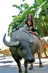 IMG_0871 (GigoloArt) Tags: girls buffalo vietnamese vietnam viet riding sapa waterbuffalo