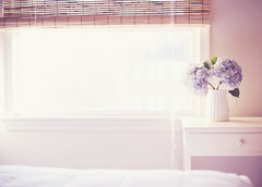 Live in rooms filled with light. (*Peanut (Lauren)) Tags: still nikkor50mmf14 corneliuscelsus argbacktoworktoday sameroomdifferentseason
