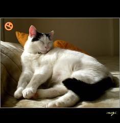 Monday smiling for us:) (sevgi_durmaz) Tags: lighting smiling animal cat relax happy funny napping lovely 1001nights brightness kissable pamuk morningsmiling 1001nightsmagiccity