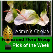 Fauna and Flora Group Admin pick of the week