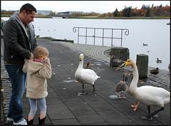 Feeding The Birds At Tjornin Lake (zenseas working) Tags: reykjavik feedingthebirds tjorninlake icelandoctober2010