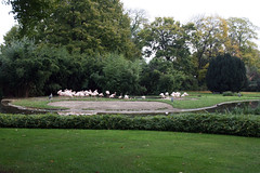 Übersicht Flamingogehege
