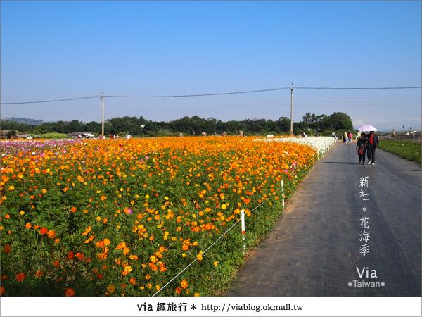 【2010新社花海】via帶大家欣賞全台最美的花海!9