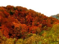 秋の栗駒-2-