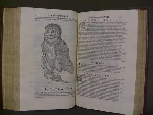 Vlyssis Aldrovandi ... Ornithologiae, hoc est de avibvs historiae, libri XII ... Owl