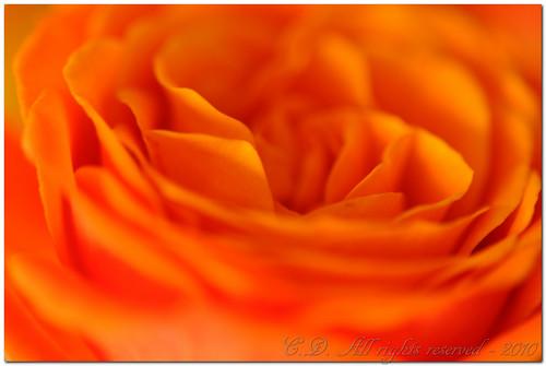 Orange dreaming