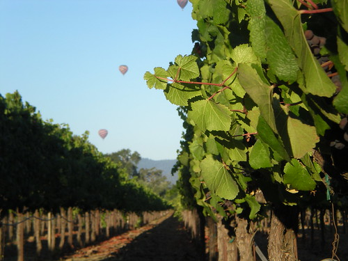 Hot air balloon morning at Luna Vineyards 10/10