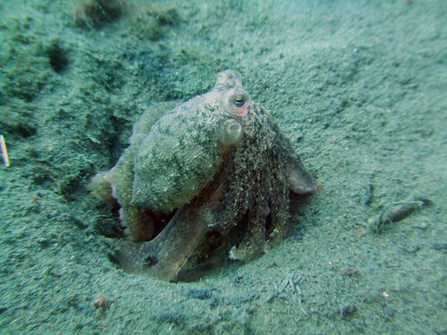 reef octo2