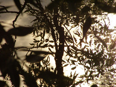 Evening Shadows (Tim Noonan) Tags: art water leaves reflections shadows manipulation copperlantern awardtree amongstthethorns daarklands